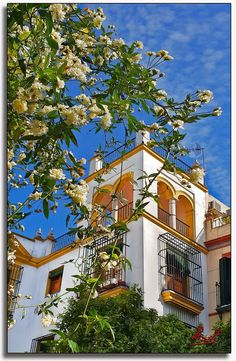 Sevilla Spain, Andalusia, Seville, Mansions, World, House Styles, Decor, Cities, Classical Architecture
