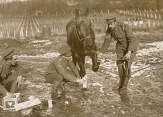 WW1. Army Veterinary Corps treated a wounded war horse (1916)