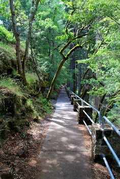 Burney Falls trail, CA.                          Love this trail.