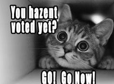 You hazent voted yet? Go! Go Now! #catoftheday