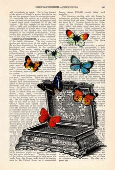 Resultado de imagen para butterfly illustration vintage
