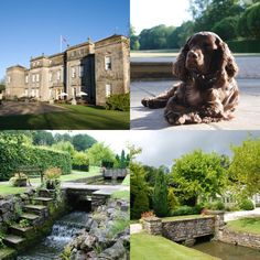 With 36 acres of  back garden  Ston Easton provides the pawfect dog  friendlyBudock Vean Hotel and Spa offers luxury dog friendly accommodation  . Dog Friendly Places To Stay Bath. Home Design Ideas