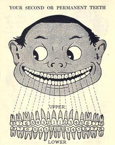 A Child's Book of Teeth.Harrison Wader Ferguson, D.D.S., 1922.