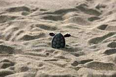 This I have never seen a turtle do! | LangweileDich.net – Bilderparade CCXCI