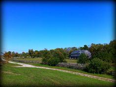 Kentucky Horse Farm - Bethel Road in Lexington KY by Lizette Fitzpatrick, www.lizette.us