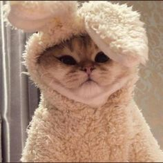 A bunny takeover! (shoutout to Tootie for being a good kitty and dealing with this costume ) Cute Cat Memes, Cute Cat Gif, Cute Funny Animals, Cute Baby Animals, Funny Cats, Cute Kittens, Cats And Kittens, Baby Cats, Kitty Cats