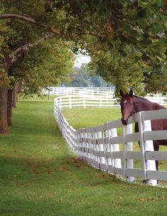 Jennings & Gates: Notes from a Virginia Country House™: The Annual Hunt Country Stable Tour Every year, for one weekend, the horses of Middleburg & Upperville, VA, kindly open the doors of their stables to visitors. Country Farm, Country Life, Country Roads, Country Living, Kentucky Horse Farms, Future Farms, My Old Kentucky Home, Horse Ranch, Farms Living