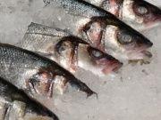 Fisch Räuchern Anleitung
