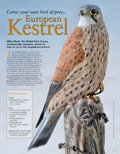 #230 Bird Carving - European Kestrel - Wood Carving