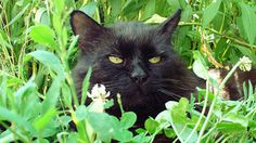 The 13 Best Black Cat Jokes! When is it unlucky to see a black cat? When you are a mouse! - See more at: http://mirthinablog.com/2015/10/05/the-13-best-black-cat-jokes/#sthash.DGZZDIz0.dpuf #halloween #jokes