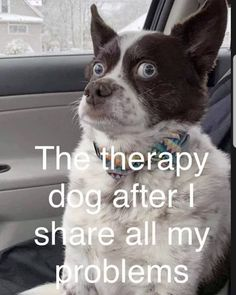 funny animal pics Funny Animal Pictures Of The Day 24 Pics - Funny Animals - Daily LOL Pics Funny Animal Jokes, Funny Dog Memes, Cute Funny Animals, Funny Animal Pictures, Funny Dogs, Funny Animal Sayings, Funny Pet Quotes, Funny Thursday Quotes, Funny Looking Animals