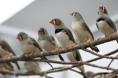 Call centre. Bird brains wired for communication.