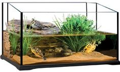 Turtle Habitat on Pinterest Turtle Tanks, Aquatic Turtles and Red ...