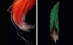 Robert Clark delves into the exquisite gem-colored world of birds in his recently released book—Feathers: Displays of Brilliant Plumage. A fascinating visual examination of the multitude of colors and functions of the seemingly-simple bird feather, the book pairs beautifully clear shots of bird species and their feathers with explanatory descriptions of their functional uses and evolutionary importance. From the bright green plume that adorns the head of the Golden-Headed Quetzal in South…