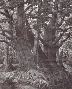 """Monica Poole (1921-2003) """"Old Trees"""" wood engraving. Signed, titled and numbered 23/75. 241 X 196 mm."""