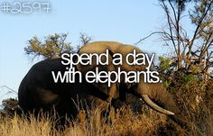Before I Die bucket-list ... (I will NOT ride an elephant)