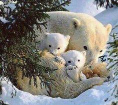 Mama & Baby Polar Bear