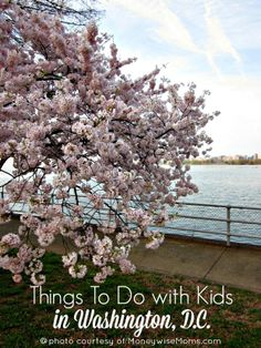 An insider's guide to Washington, D.C. with kids. Thanks to Gina at MonewiseMoms.com for this post! Find more: http://www.musingsofahousewife.com/2014/06/things-kids-washington-d-c.html