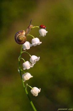 the snail and the ladybug (fleur de muguet) Beautiful Bugs, Amazing Nature, Beautiful Flowers, Beautiful Pictures, Beautiful Creatures, Animals Beautiful, Cute Animals, Tier Fotos, All Gods Creatures