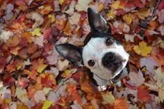 Cachorro.co: Como cuidar de uma cadela no cio www.cachorro.co