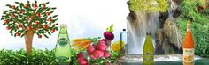 Juicing For Health Conditions – Quick Reference Guide | Health Juices - Healthy Drinks