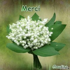 Greeting Cards, French, Beautiful, Good Morning Gif, Happy Mothers Day, Pictures Of Flowers, Dove Drawing, Craft Studios, Good Day