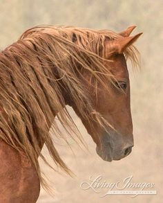 Wild Wind Close up Wild Horse Photograph by Carol Walker www.LivingImagesCJW.com