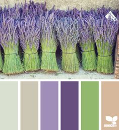 Bundled hues (design seeds)