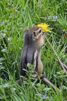 A young Chipmunk exploring his new world for the first time by H Oke**