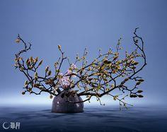 ユニークな形の自作花器に開いたしずく形の穴と、もくれんのつぼみの形―。ちょっとした共通点を意識しながらいけました。さんしゅゆとスイートピーで色のアクセントをつけます。花材:もくれん、さんしゅゆ、スイートピー 花器:自作陶器花器 Drop-shaped holes on the uniquely formed original vase and the shapes of Magnolia heptapeta buds….Such detailed thematic points were kept in mind when arranging this work. Japanese cornel and sweet pea were added as color accents. Material:Magnolia heptapeta, Japanese cornel, Sweet pea Container:Original ceramic vase #ikebana #sogetsu