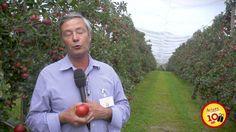 La pomme Ariane vue par ceux qui la font - Guy Verguin En septembre dernier, un voyage de presse a été organisé dans les vergers du coteau lyonnais pour fêter les 10 ans de notre belle pomme Ariane ! A cette occasion, les pomiculteurs d'Ariane racontent ce qu'ils aiment le plus chez leur pomme préférée.