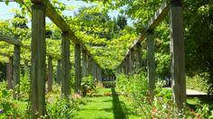 Vines at Parc de Bercy