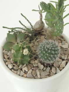 Mini Potted Succulents Tutorial (DIY Tips no.2)