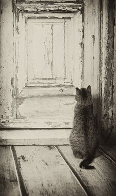"""Cats hate a closed door regardless of which side they're  on.  If they're out, they want to get in.  If they're in, they want to get out."" --Lillian Jackson Braun"