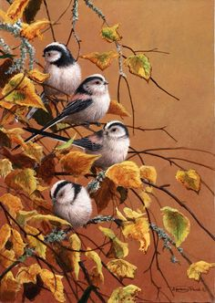 All images are the original artwork of nature artist and wildlife artist Dr. Jeremy Paul and are protected by international copyright laws. Wildlife Paintings, Wildlife Art, Animal Paintings, Pretty Birds, Beautiful Birds, Autumn Scenes, All Birds, Backyard Birds, Bird Illustration
