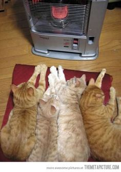 How cats stay warm in the winter…