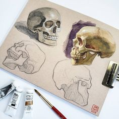 Skull study by on Toned Tan Mixed Media 💀 Top left in watercolor 💀 Top right in gouache Skull Painting, Gouache Painting, Painting Art, Skull Anatomy, Anatomy Art, Art Sketches, Art Drawings, Biro Art, Skulls