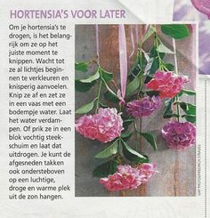 hortensia's drogen Flower Decorations, Hydrangea, House Design, Gardening, School, Flowers, Plants, Diy, Hydrangeas