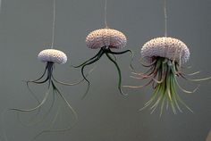 Three different air plants set in hanging sea by LazyRsAirPlants, pretty cool