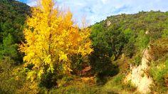 Balada de otoño