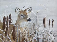 Giclee fine art paper and canvas prints from my original oil painting of a Whitetail Doe among hoar frosted cattails by a partially frozen pond by Johanna Lerwick Wildlife / Nature Artist Several sizes available. Pond Painting, Original Art, Original Paintings, Nature Artists, Oh Deer, Wildlife Nature, Realism Art, Fine Art Paper, Colorful Backgrounds