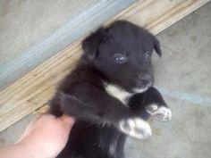 14 Best Shih Poo Images Shih Poo Dogs Shih Tzu Poodle Mix