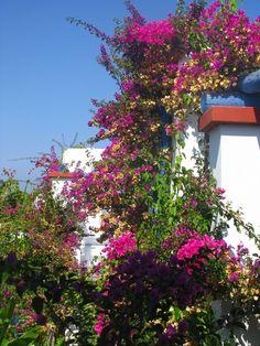 Sissi, Crete, Greece.I can feel the sunshine!