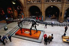 6 strange things in the London Natural History Museum Cromwell Road, next to the V&A