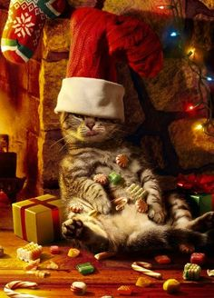 Christmas-cat humor