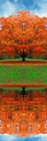 beautiful fall tree and relection