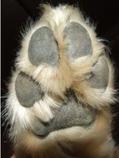 Dog Nail Trimming - Tips for Clipping a Frightened Pet's Nails  http://petlvr.com/blog/2012/02/06/dog-nail-trimming-tips-for-clipping-a-frightened-pets-nails/