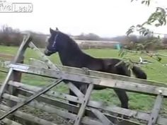 horse pictures,horses for sale,horse for sale,horse games,white horse,retarded running horse,horse jumping,war horse,retarded horse,retarded horse running,senses fail,fail compilation 2013,parkour fail,Horse Fall,Horse fail,Funny fail