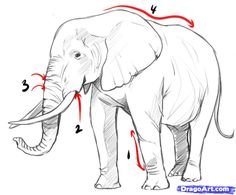 how to draw an elephant - Szukaj w Google