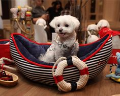 Mochi is ready to set sail in the ED Ellen DeGeneres Boat Cuddler Dog Bed, available only at PetSmart.